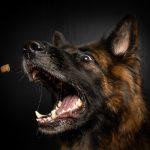 أشهر 10 تفسيرات في رؤية الكلاب في المنام للعزباء والمتزوجة