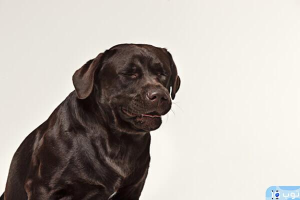 تفسيرات أخرى لرؤية الكلاب في المنام